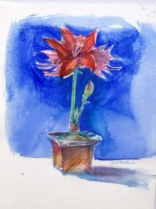 Watercolor painting of Amaryllis